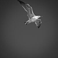 Flying escort